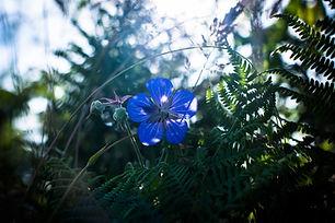 PlantesSauvagesAAEBD19©_Naïade_Plante-53