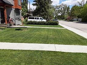 lawn 3.jpg