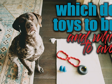 Which Dog Toys Should I Buy and Which Do I Avoid?