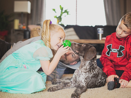 7 Things You Must Teach Your Kids When Bringing Home A New GSP Puppy