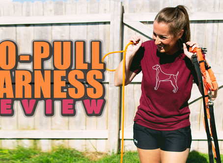 No-Pull Harness Review