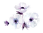 anemone-cluster-01.png
