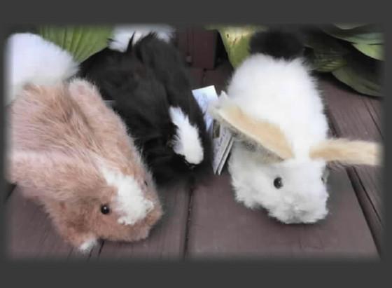 My Easter Bunnies