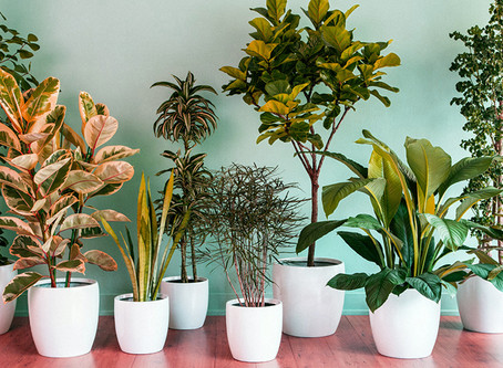 House plants that will purify the air inside your home !