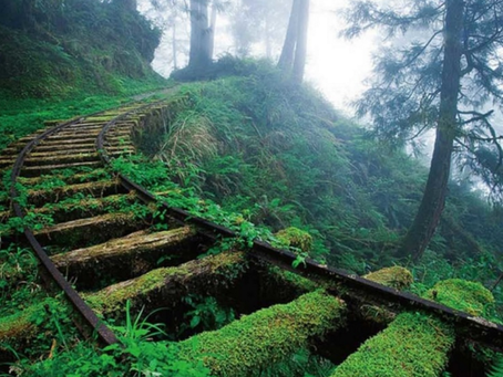 Incredible Example of Architecture Reclaimed by Nature !!