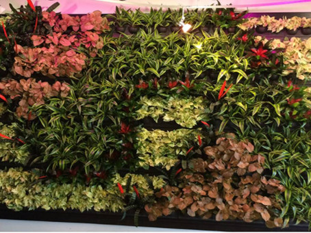 A wall now, inside and outside your home, can be your green statement !!