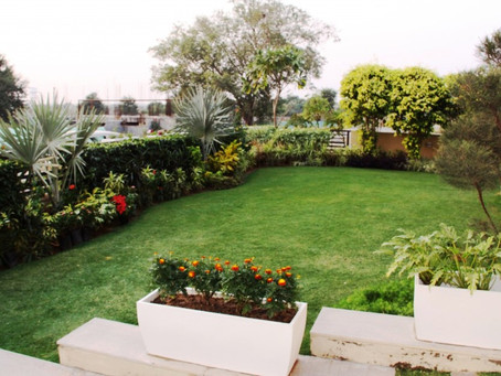 Creating The Most Amazing Terrace Garden !