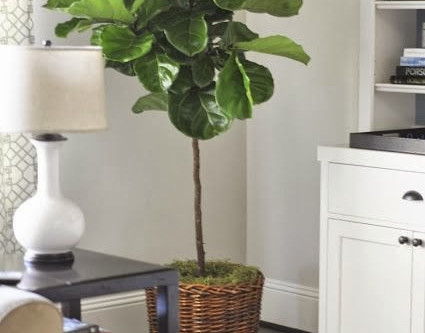 Life Size Artificial  Trees for Home and Commercial Spaces !