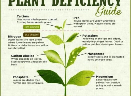 PLANT DEFICIENCY GUIDE !