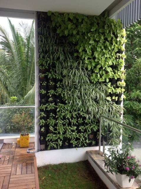Natural Green Wall