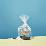 ESQUIRE-fishbowls-S7-v2-FGHP.jpg