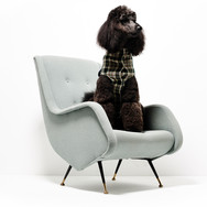 HARPERS mulberry dog 37127 T1 copy.jpg