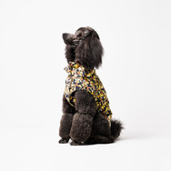 HARPERS mulberry dog Yellow V1 fgsF copy