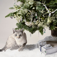 T&C Christmas tree and Cat V2.5 FGHP cop