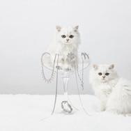 HARPERS-cat-in-a-glass-V2-FGHP.jpg