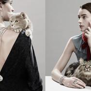 T&C-Cats-3-WEB-3300.jpg