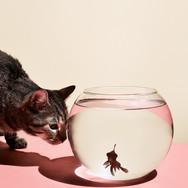 ESQUIRE-fishbowls-S9-v2-FGHP.jpg