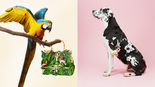 HB-parrot-and-dog-3300.jpg