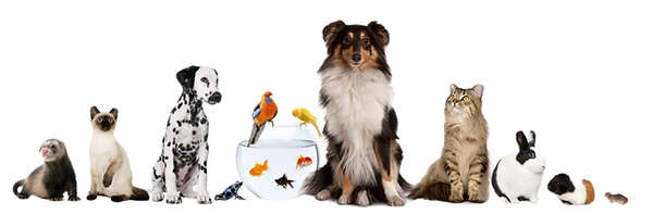 Pets-Lineup-1030x332_edited.png