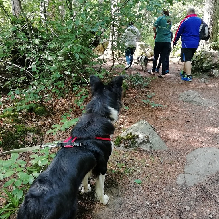 5 Day Dog Centred Holiday / Workshop: Improving Dogs' Social Skills (1)