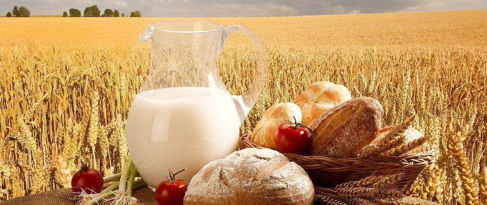 milk_jug_bread_rolls_basket_tomatoes_oni