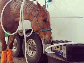 Horse PEMF Treatment Hershey, PA