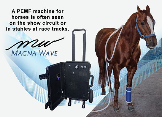 magna-wave-PEMF-machine-for-horses-show-