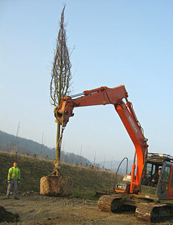 Heavy Machinery Tree Planting