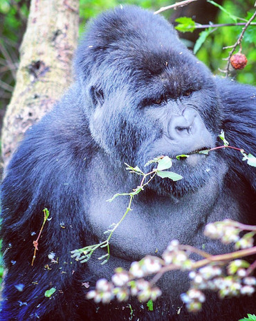 Rwanda.JPG