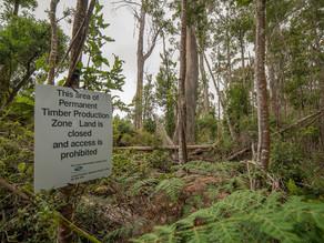 Logging, buffers and fire danger.