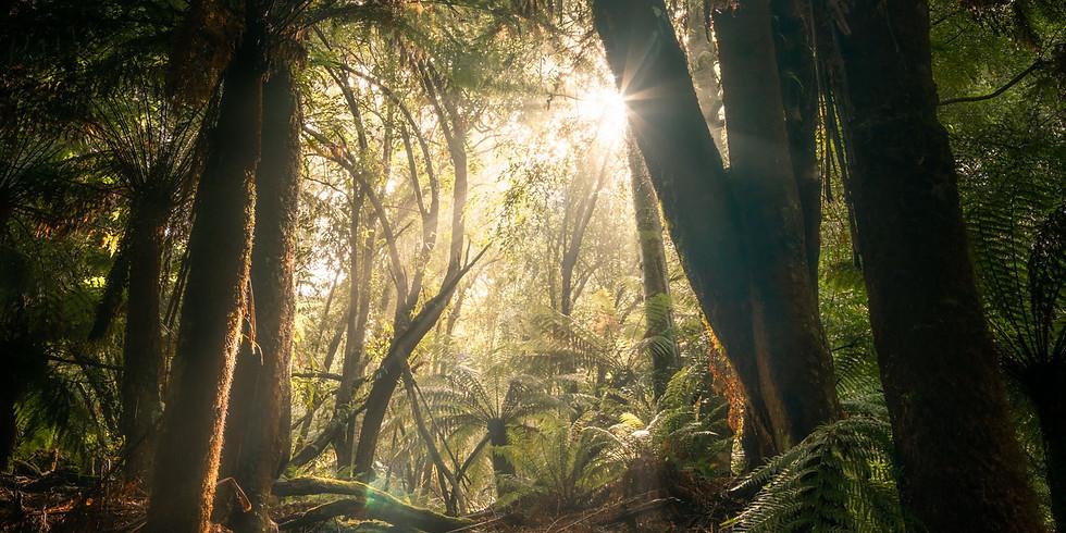 Citizen Science, Tas Tree Fern survey