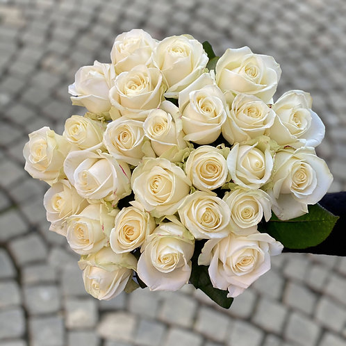 Roses White Avalanche