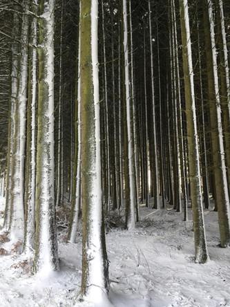 La rigueur de l'hiver et du vent.