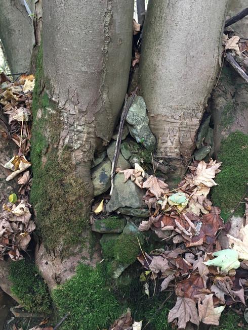 Petite surprise aux pieds des arbres.