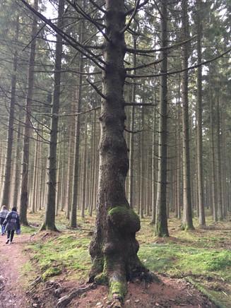 L'insolite se découvre dans nos forêts magiques.
