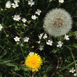 Ah, ces fleurs, quelle beauté.