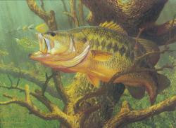 Soft Plastics for Largemouth Bass