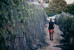 Maude Wines Vineyard Wanaka NZ (2).jpg