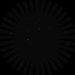 WEBSITE_LAYOUT_NERVYB-18.png