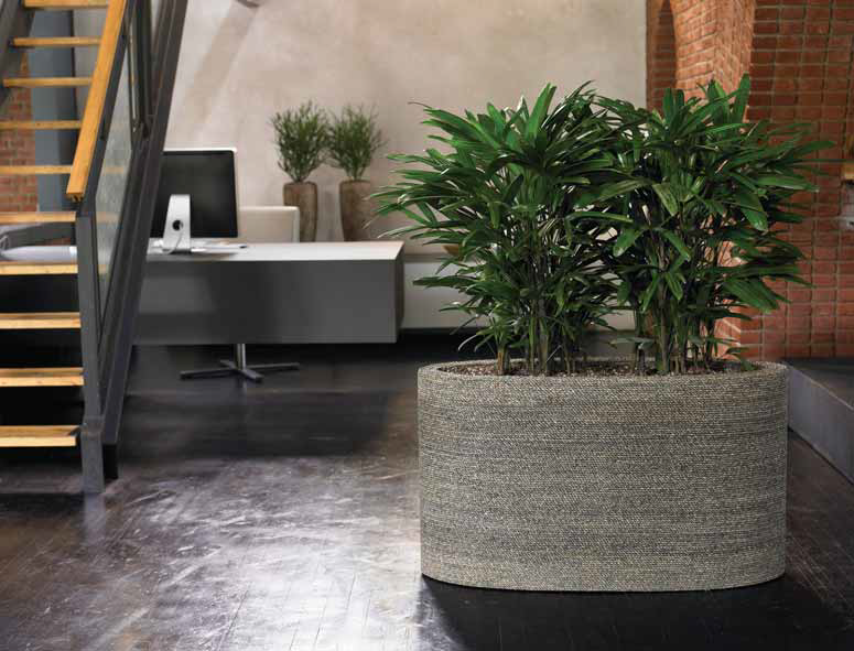 Planted trough in office
