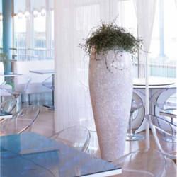 Luxury Office Plants