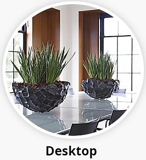Desktop Office Plants