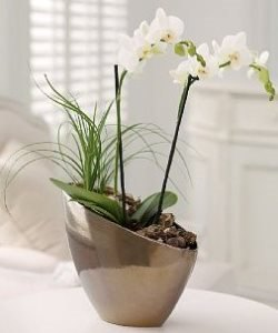 Orchid Bowls for offices