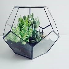 Office Terrarium rental service