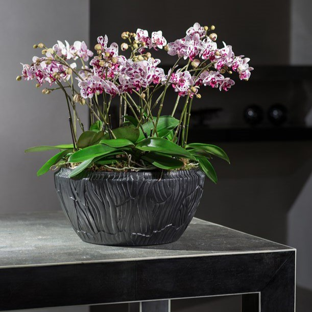 Orchids for offices