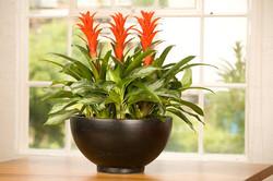 Tropical flower rental