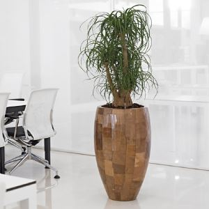 Smooth wood office plant display