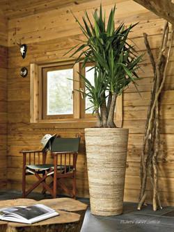Light wood office plant display