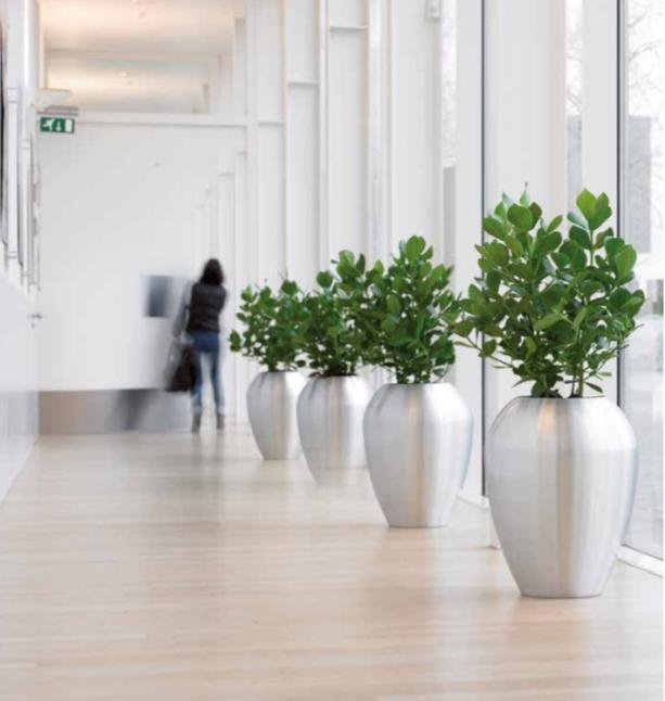 Stylish metal office plant display