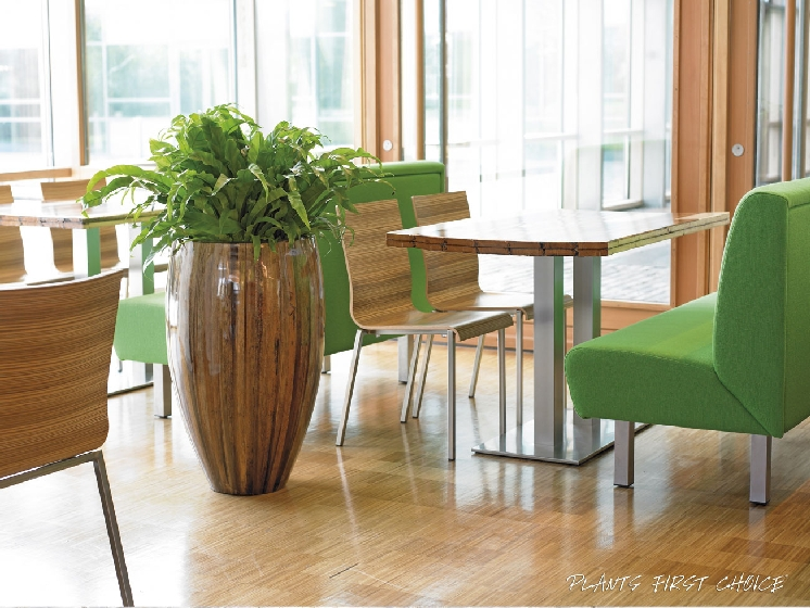 Polished wood office plant display
